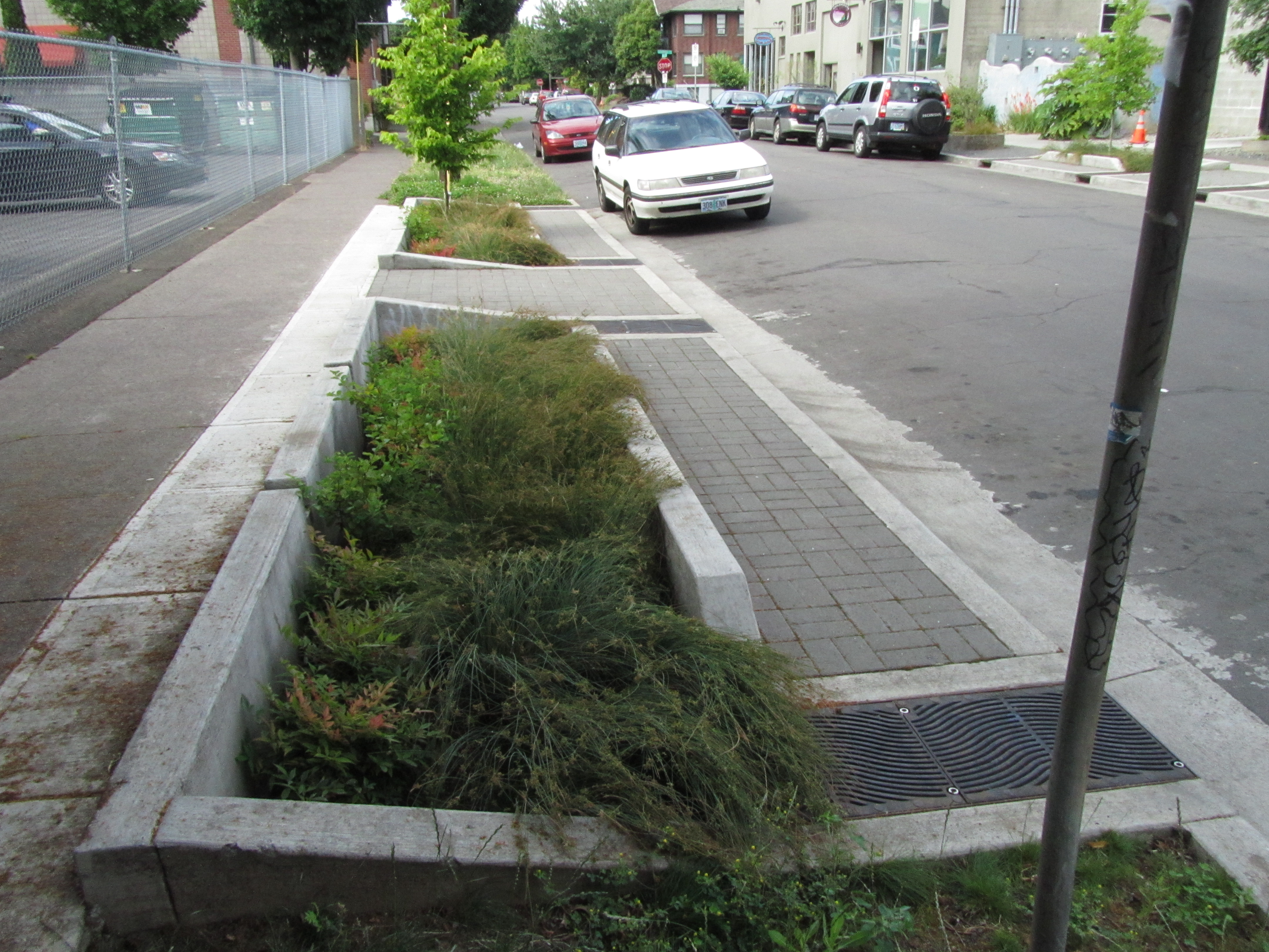 Bioswale Life In Common